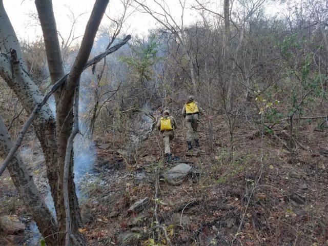 Incêndio no Sertão da PB é controlado após sete dias de chamas e bombeiros suspeitam de crime