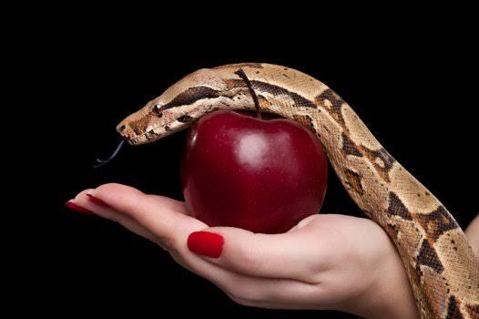 Estela agora vai saber quanto custa aquela mordida na maçã